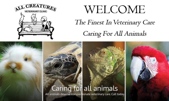 ALL CREATURES VETINARY CLINIC INC