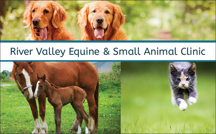 RIVER VALLEY EQUINE CLINIC & SMALL ANIMAL HOSPITAL