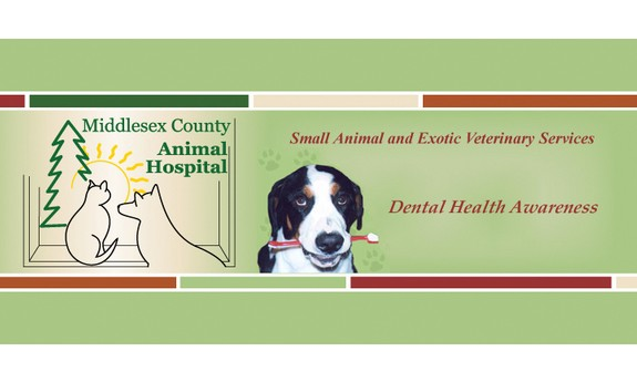 MIDDLESEX COUNTY ANIMAL HOSPITAL
