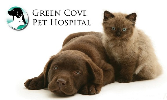 GREEN COVE PET HOSPITAL