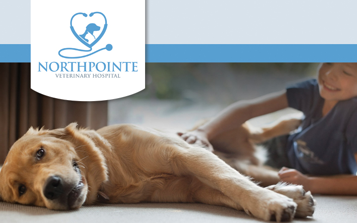 NORTHPOINTE VETERINARY HOSPITAL