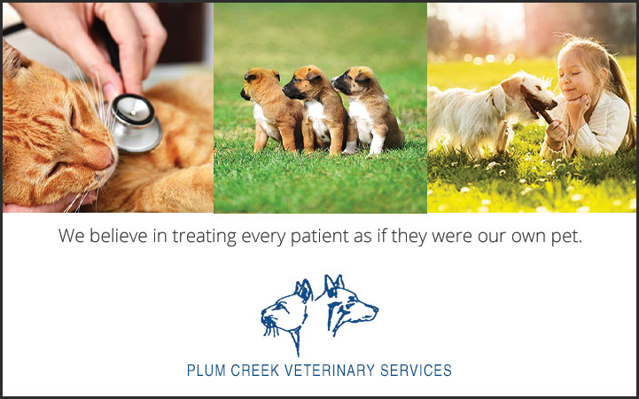 PLUM CREEK VETERINARY SERVICES