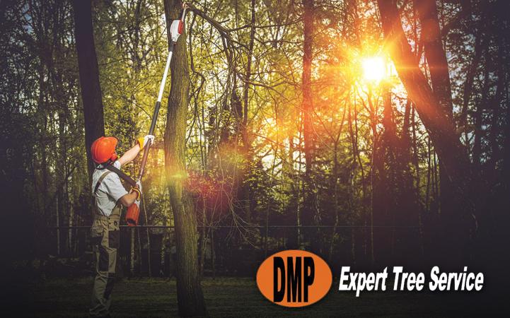 DMP EXPERT TREE SERVICE