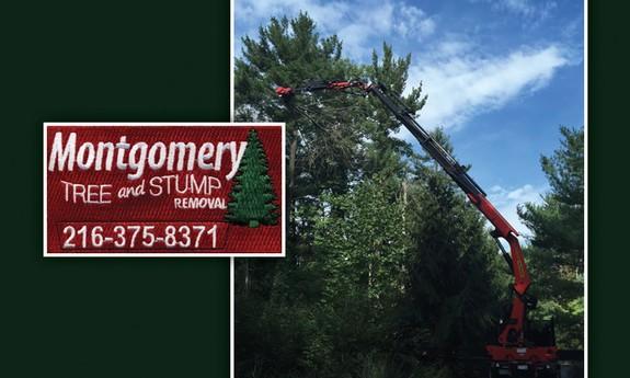 MONTGOMERY TREE & STUMP REMOVAL