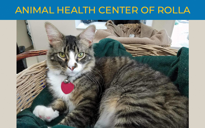 ANIMAL HEALTH CENTER OF ROLLA