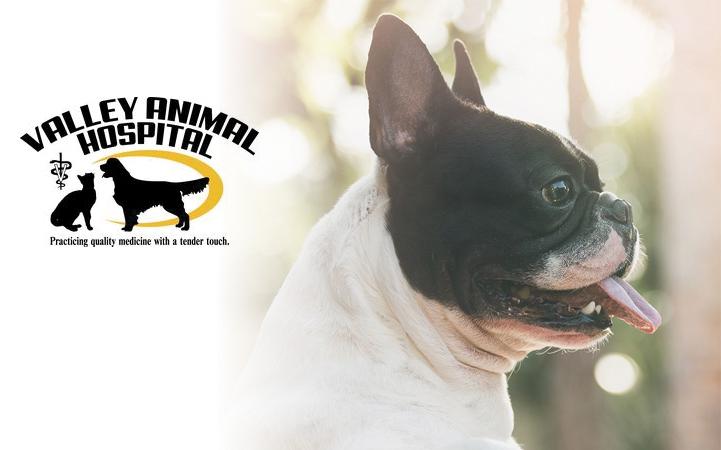 VALLEY ANIMAL HOSPITAL LLC