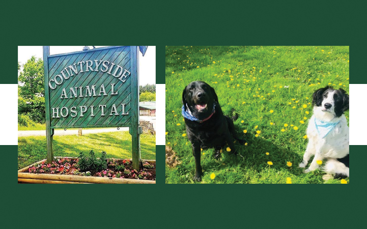 COUNTRYSIDE ANIMAL HOSPITAL - Local ANIMAL HOSPITALS in Oakland, MD