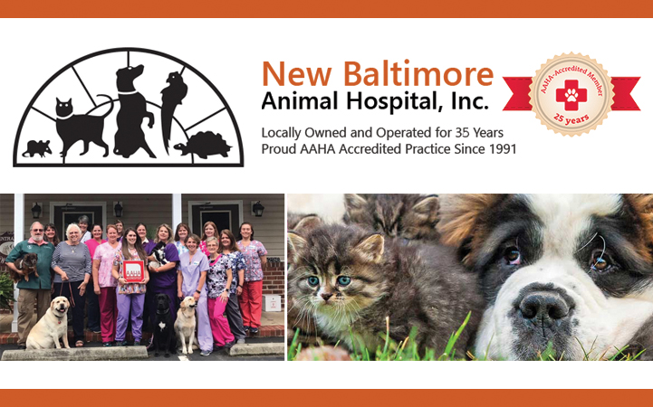 NEW BALTIMORE ANIMAL HOSPITAL