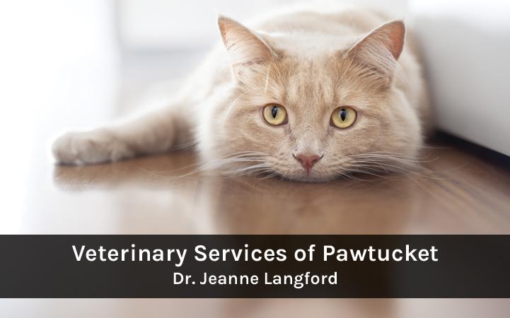 VETERINARY SERVICES OF PAWTUCKET
