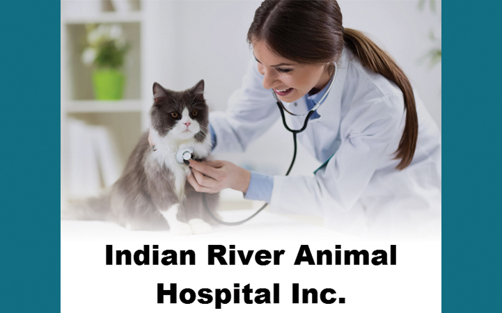 INDIAN RIVER ANIMAL HOSPITAL - Local VETERINARIANS in Vero Beach, FL