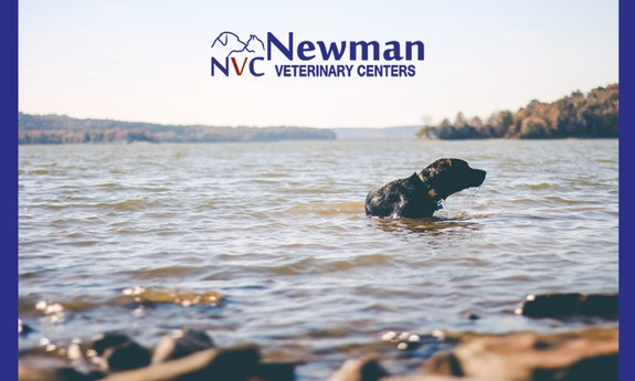 NEWMAN VETERINARY CENTER EDGEWATER - Local VETERINARIANS in Edgewater, FL