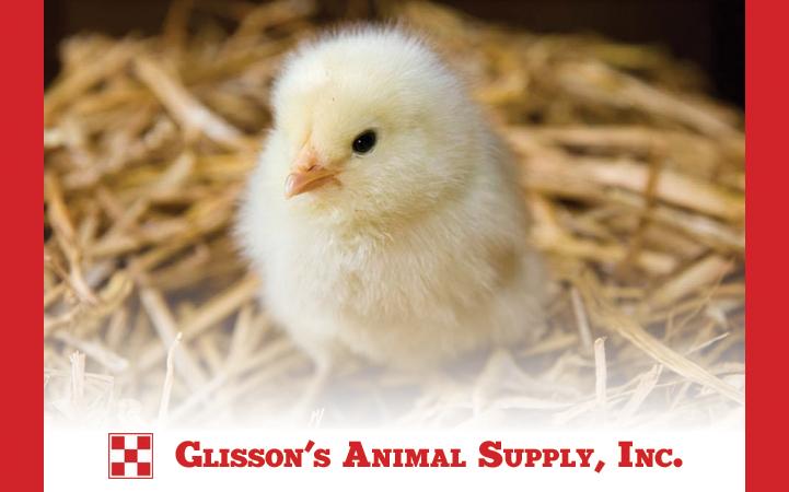 GLISSONS ANIMAL SUPPLY INC