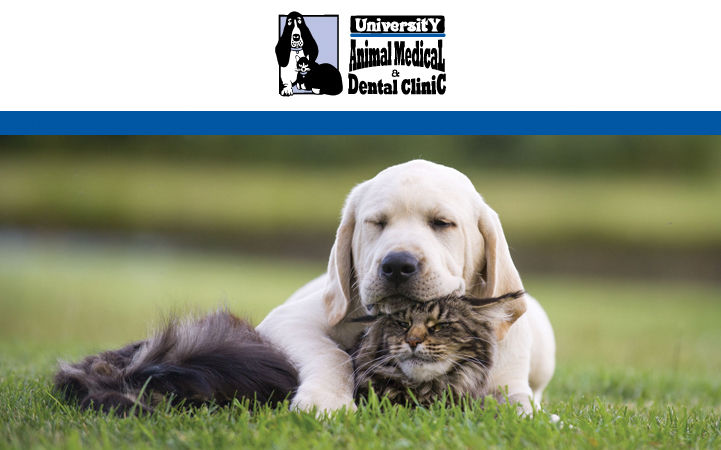 UNIVERSITY ANIMAL MEDICAL AND DENTAL CLINIC