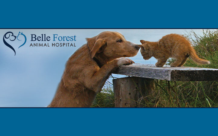 BELLE FOREST ANIMAL HOSPITAL