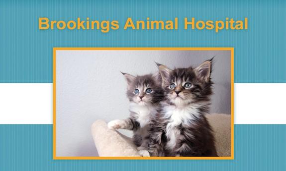 BROOKINGS ANIMAL HOSPITAL