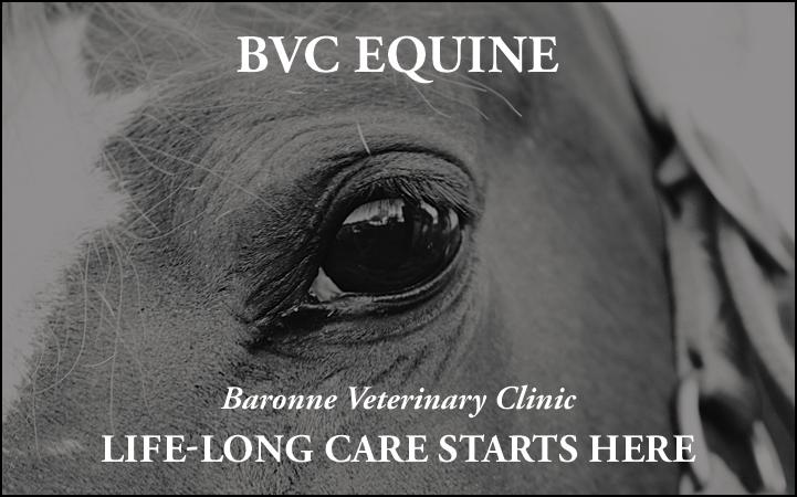BARONNE VETERINARY CLINIC LLC
