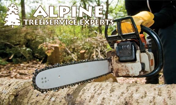 ALPINE TREE SERVICE EXPERTS, INC.