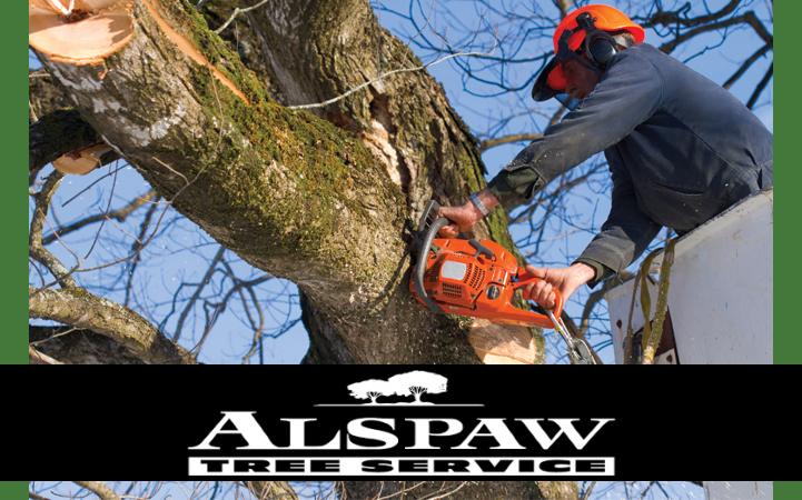 ALSPAW TREE SERVICE
