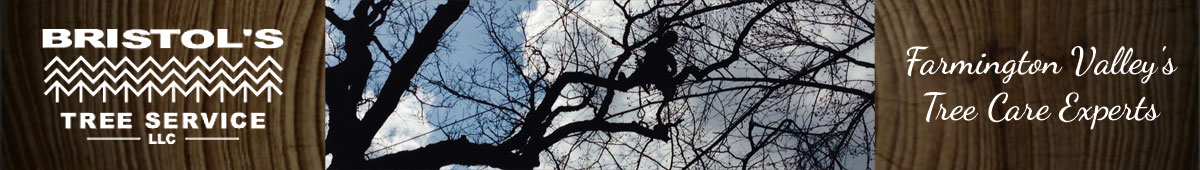 BRISTOL'S TREE & LAWN SERVICE